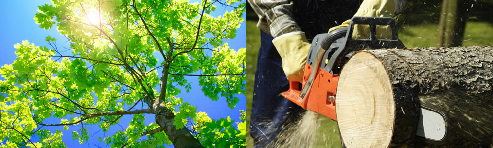 Tree Services Pacific